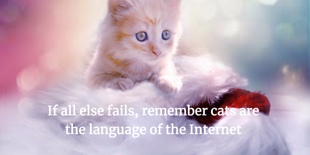 Cats are the language of the internet